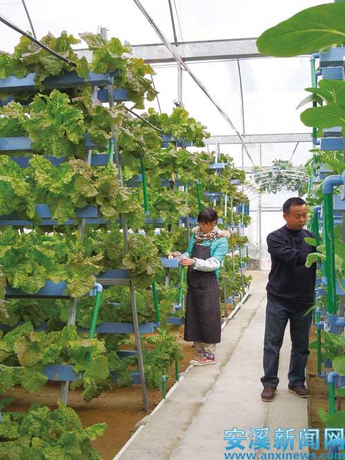 加上大棚种植,蔬菜基本上不会得病虫害