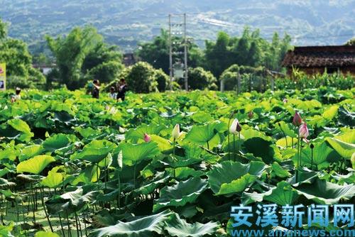 安溪虎邱镇风景区